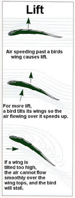 Position of wings related to air flow
