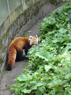 visite du zoo d'Amsterdam