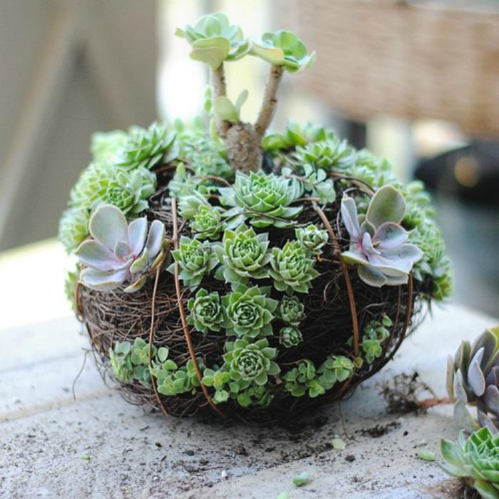 10 arreglos con plantas suculentas guia de jardin for Cactus cuidados exterior