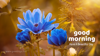 Morning fresh Blue flower greetings WhatsApp status.png