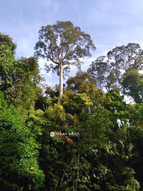 Jalan-jalan Asyik di Ekowisata Tangkahan