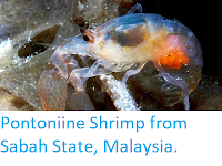 https://sciencythoughts.blogspot.com/2013/12/a-new-species-of-sponge-dwelling.html