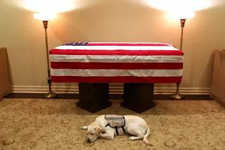 President George HW Bush's service dog lies by his flag-draped casket