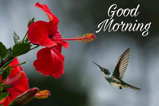 good morning ka new photos