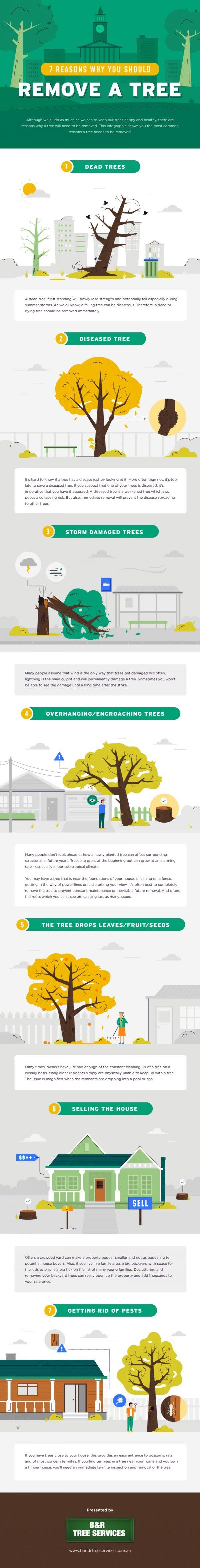 7 Why Reasons You Should Remove a Tree #infographic