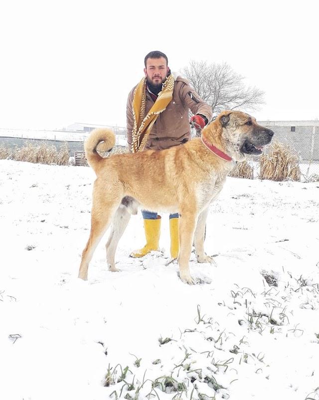 Kar yağışına Gureğhlerde sevindi