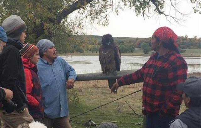 A Golden Eagle Lands On Standing Rock, Allows Water Protectors To Touch Him ScreenShot7917