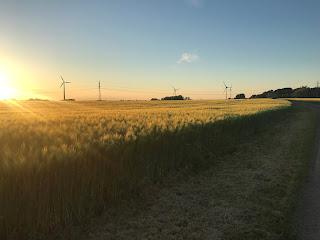Bild på fält i sol på kvällen, vindmöllor i bakgrunden.