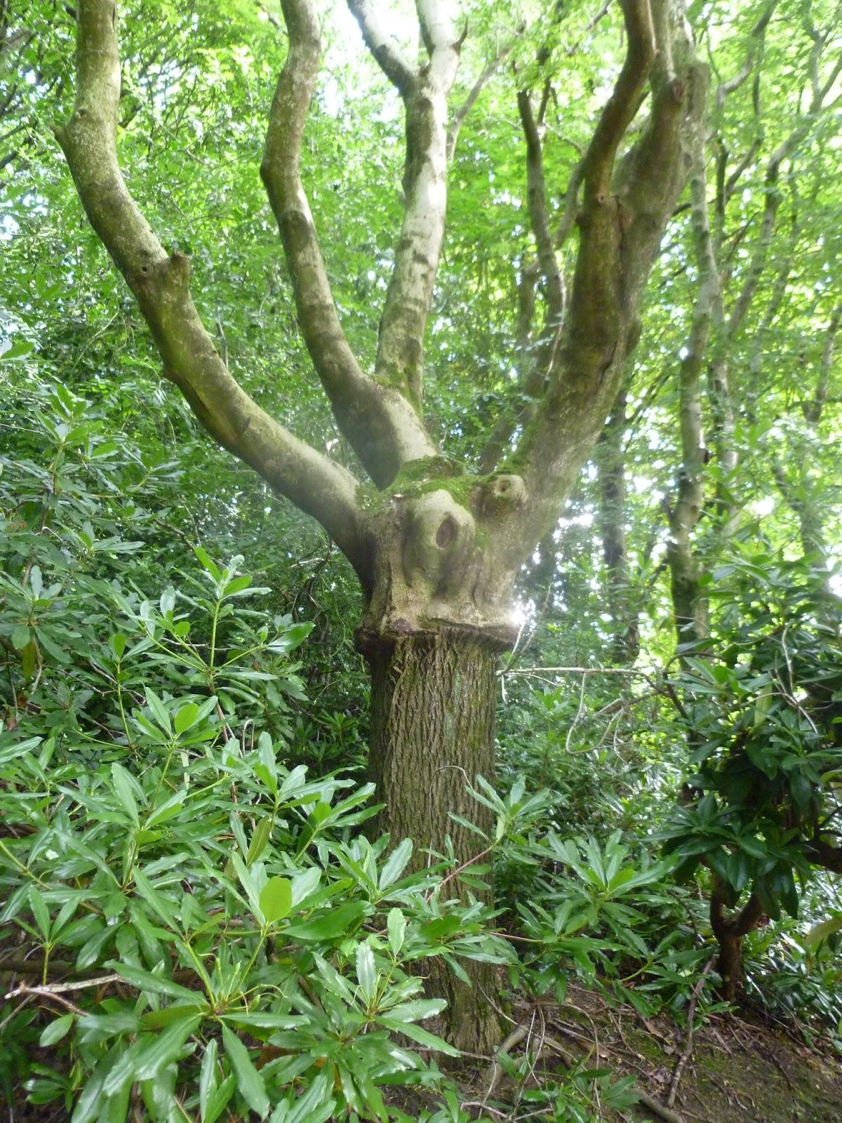 Running Delights: Tree identification