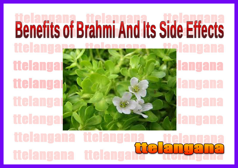 Benefits of Brahmi And Its Side Effects
