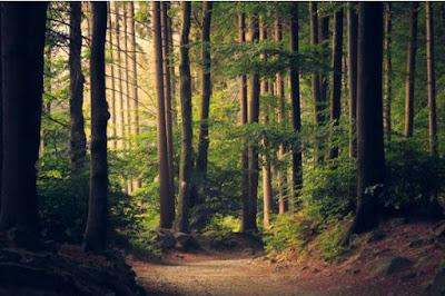 Contoh Hutan Lindung, Hutan Lindung