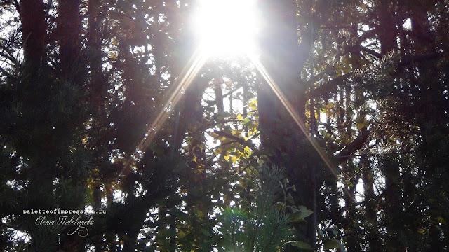 Куда поехать в Удмуртии Грибные места за деревней Макарово Блог Вся палитра впечатлений