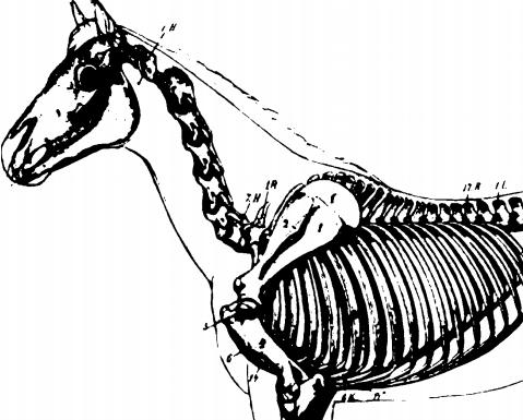 Anatomia Dos Animais Domesticos Sisson Pdf