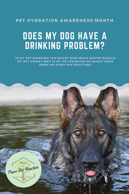 Pet Hydration Awareness Month: Does my pet have a drinking problem? Why is my pet drinking so much?