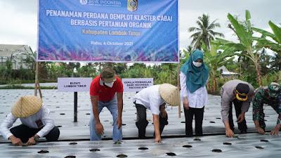 BI dan Pemkab Lotim Lakukan Demplot Klaster Cabai di Kecamatan Suralaga