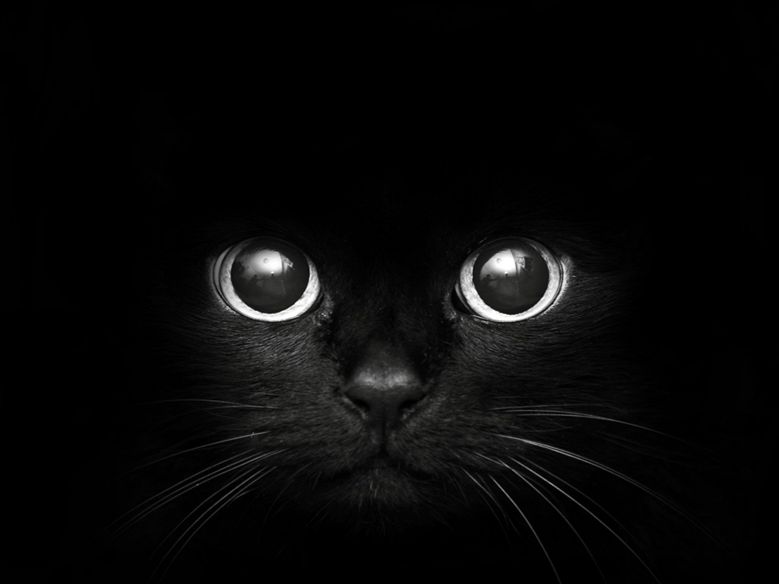 Black Eyes Wallpaper Beautiful Wallpapers Cat And