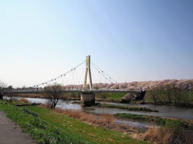 外野橋 権現堂桜堤