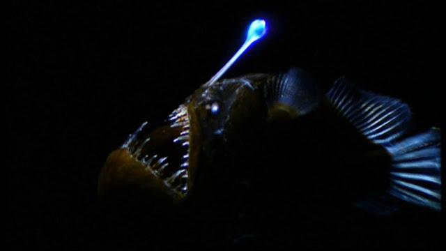 hewan menyala dalam gelap