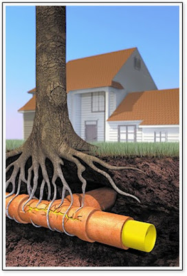 A graphic showing tree roots wrapping around a sewer pipe in the ground, looking for an entry point