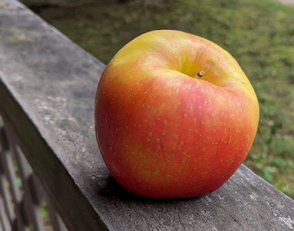 Large orange-red apple, broad and tapered