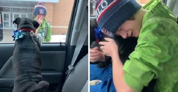 Парень очень переживал из-за потерявшейся собаки, и мама сделала ему сюрприз. Он в слезах, и вы тоже будете