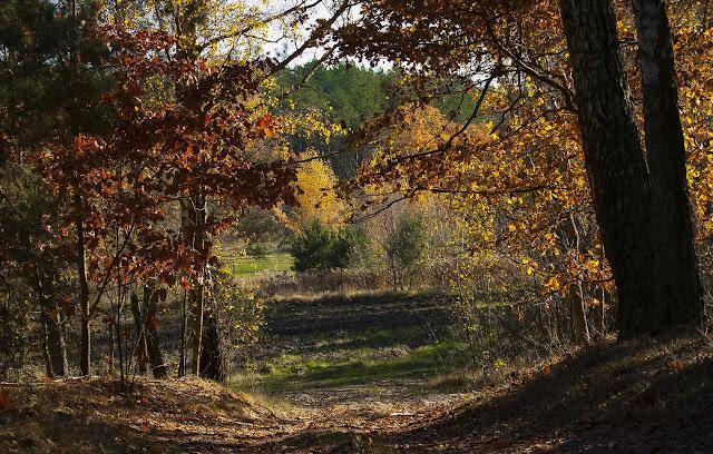 jesien, las, kolory, antymiasto, wies
