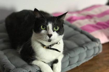 8 Manfaat Memelihara Kucing Bagi Kesehatan Manusia