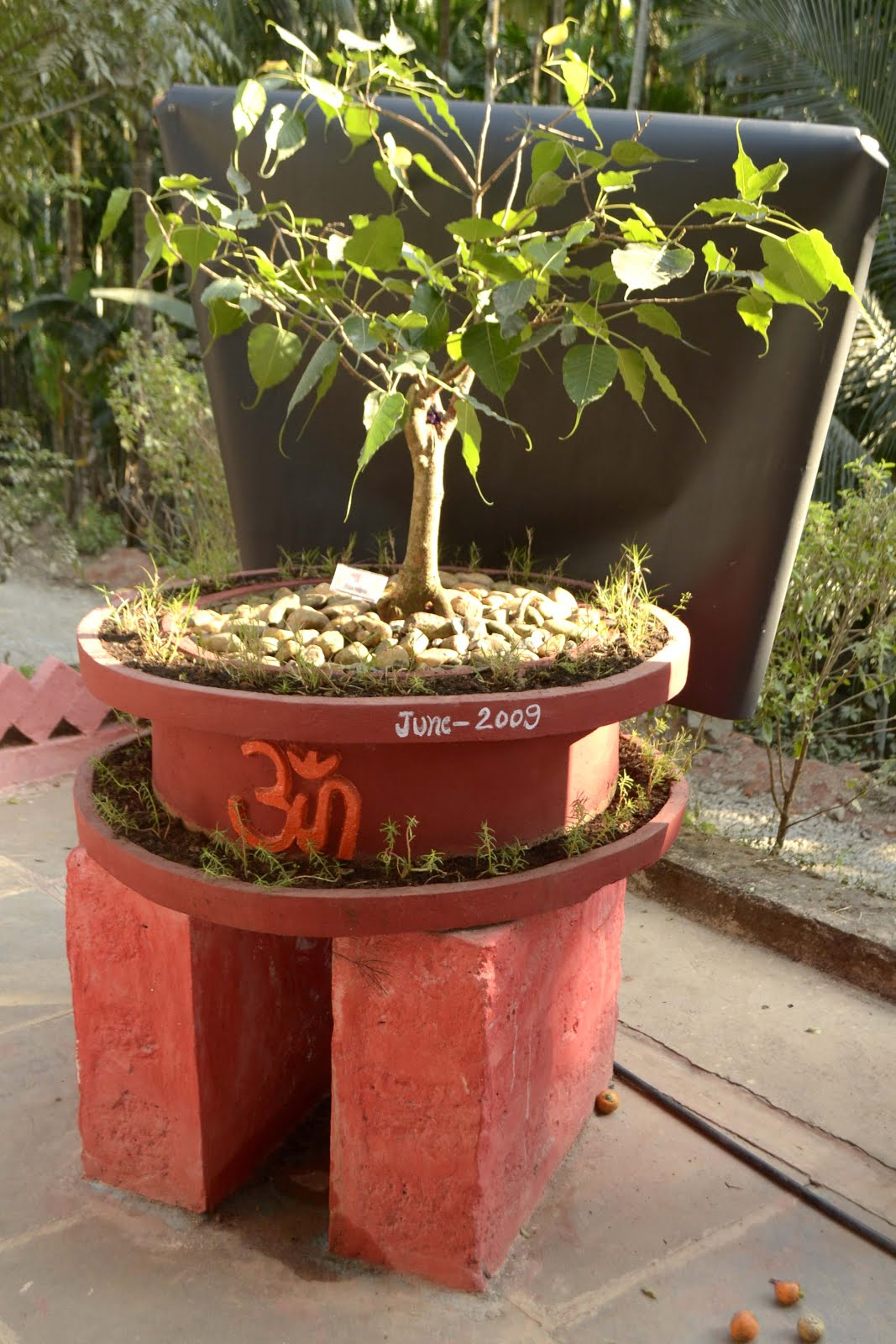 For Religious Bonsai Tree which is lucky for you