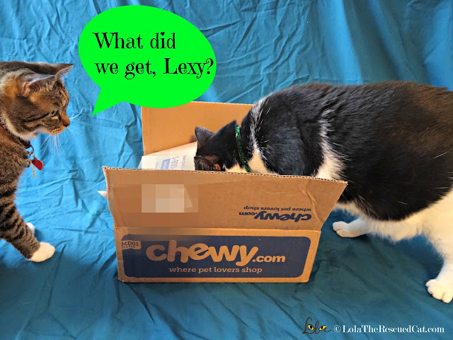 chewy.com|i and love and you canned food