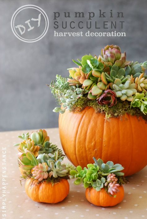 Hobby Store San Diego >> 43 Ways to Decorate with Succulents & Where to Score Good ...