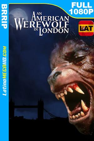 Un hombre lobo americano en Londres (1981) Latino HD 1080P ()