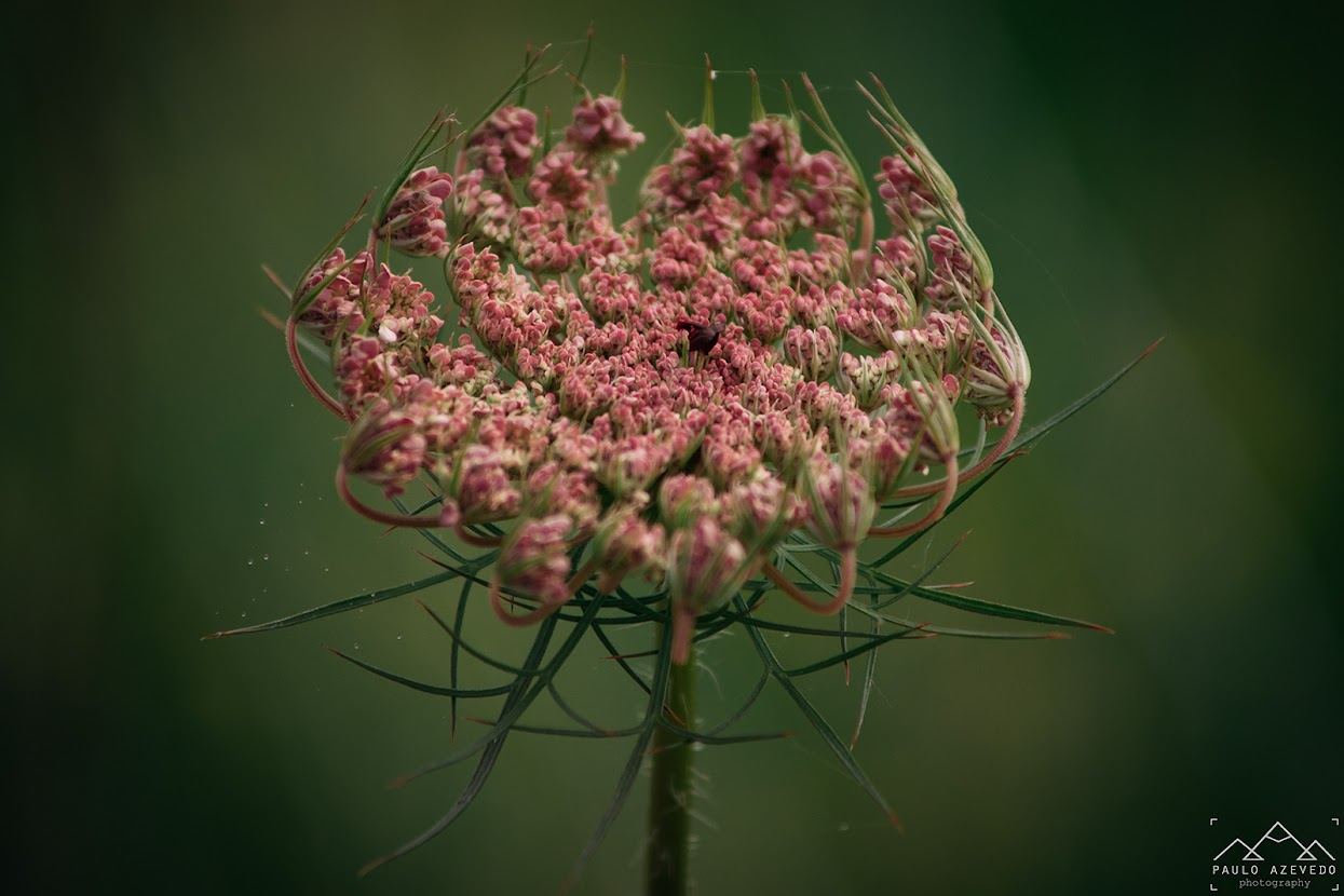 flor no trilho das jans