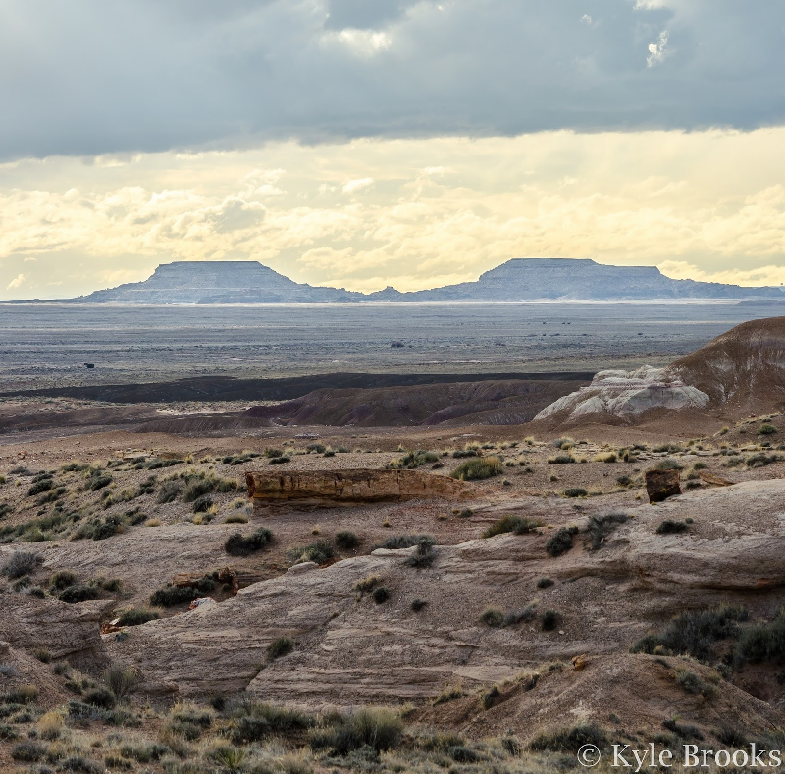 Twin Buttes Petrified Forest