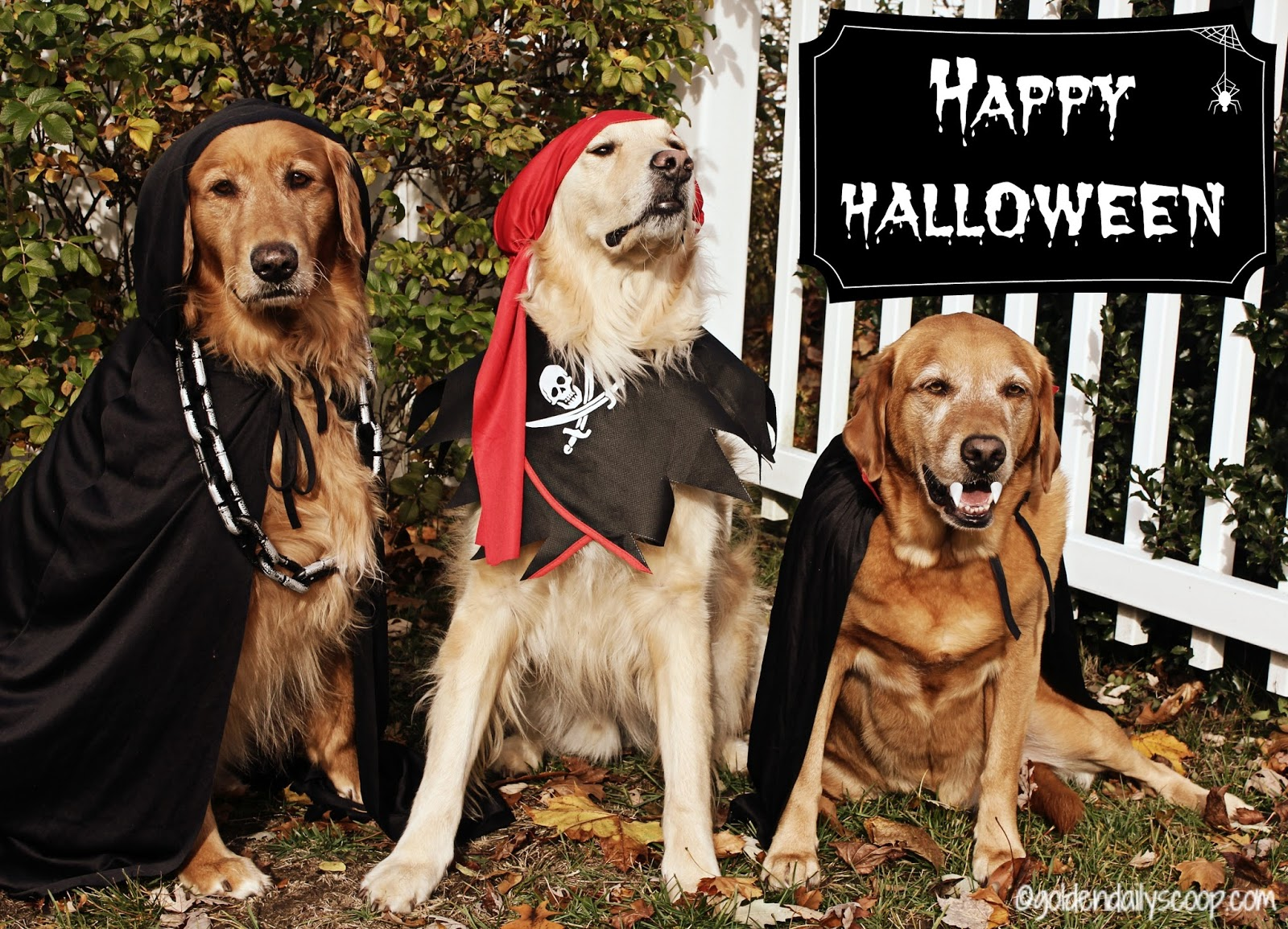 Image result for Happy halloween dog
