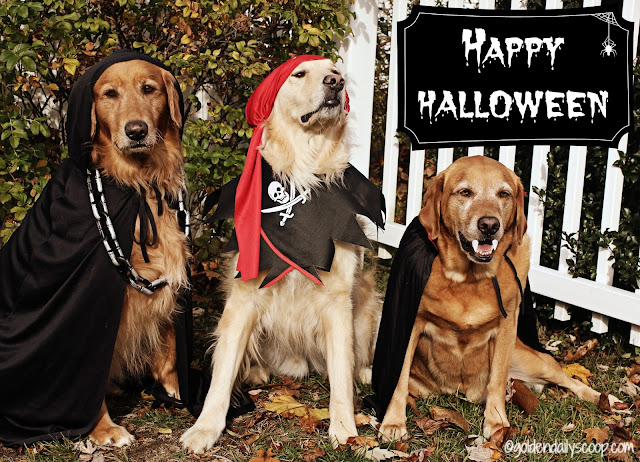 golden retriever dogs dressed in halloween costumes 2016