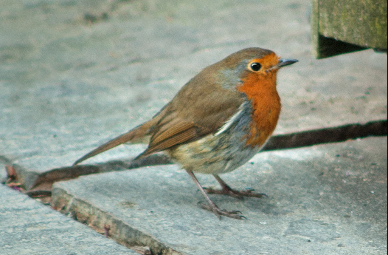 The Nook - A Garden Blog: OF BIRDS AND PREDATORS