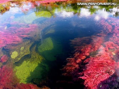 A Szivárvány folyó - a világ legszínesebb és legszebb folyója (VIDEÓVAL)