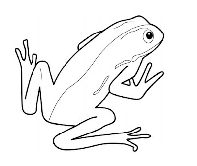 Coloring Pages Zoo Frog