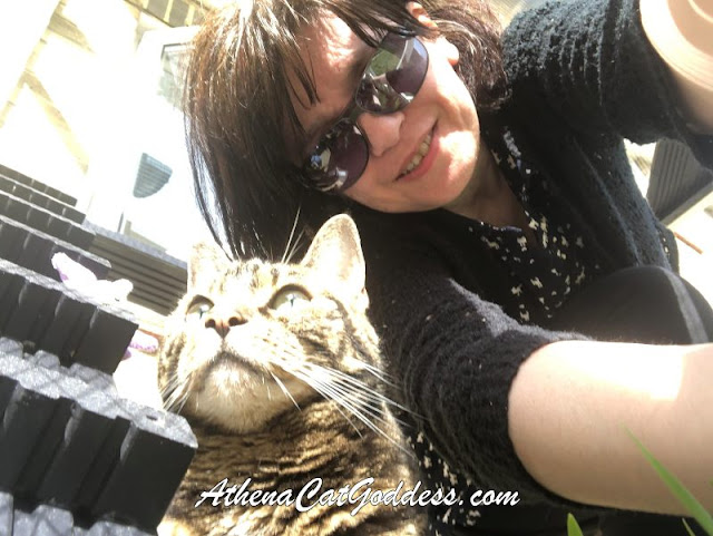 cat and human cat mum trying to take a selfie