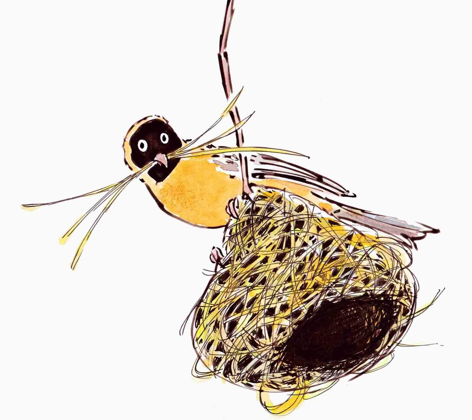 Silvergum Studio: Birds of Sudan