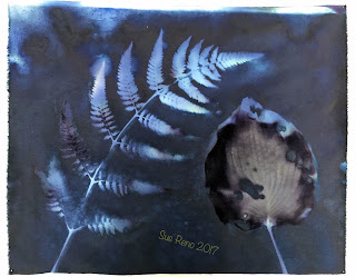 Wet cyanotype_Sue Reno_Image 198