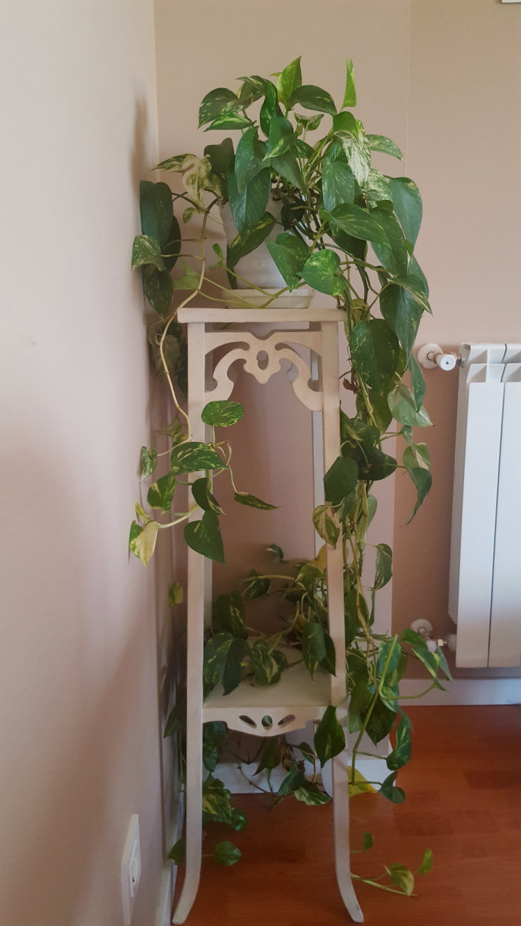 Columna para planta transformada