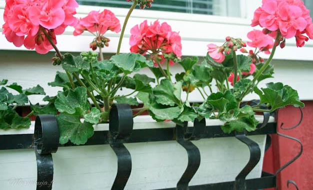 greencare kesä puutarha