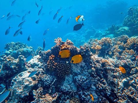 الأنواع البحرية