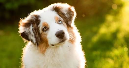 10 unknown  facts about dog.