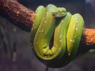 Serpent - Photo by Tirza van Dijk on Unsplash