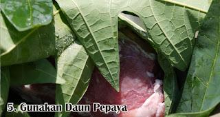 Gunakan Daun Pepaya merupakan salah satu tips mudah mengolah daging qurban sebelum dimasak