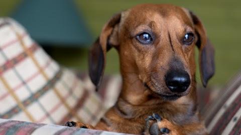 Felfüggesztett szabadságvesztést kapott egy barcsi kutyatartó