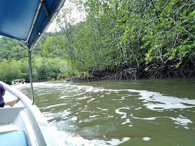menyusuri hutan paya bakau