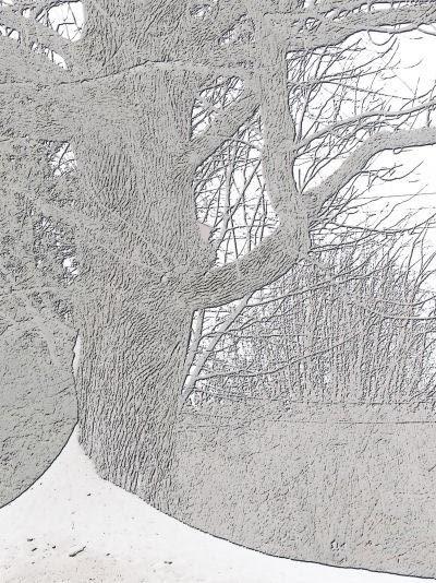 enhanced tree photo with snow
